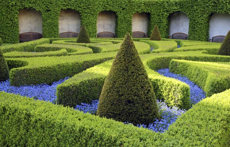 Parterre design with common box and yew Buxus sempervirens Taxus baccata