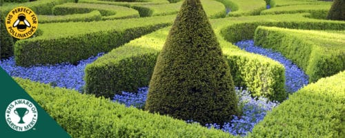 Common box hedging plants buxus sempervirens