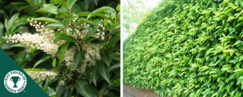 laurel portugal hedging